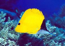 Дайвинг на Мальдивах, подводные погружения